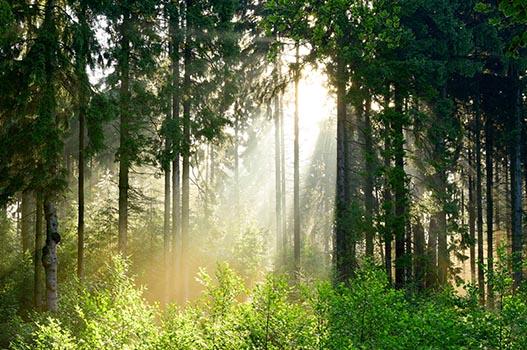 Grundstücke Brandenburg - Wald bei Sonnenaufgang