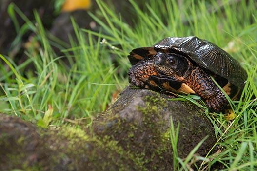 Altlastensanierung - Schildkröte