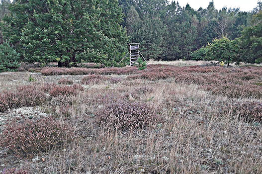 Liegenschaft in Mecklenburg Vorpommern: Wald und Hochsitz